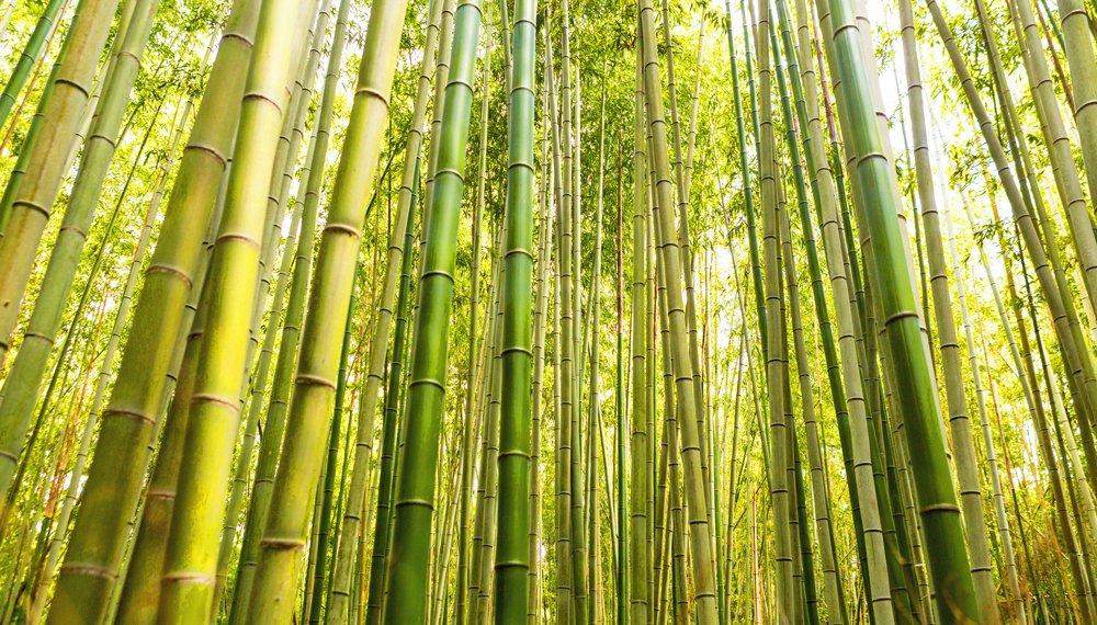 Bambu Ibuku