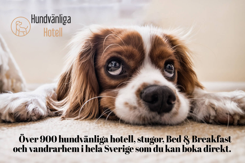 Hundvänliga Hotell